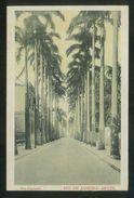 Brasil. Río De Janeiro. *Rua Paysandu* Ed. J. S. Alonso. Al Dorso Nº 305171. Nueva, Ver Dorso. - Rio De Janeiro