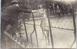 CARTE PHOTO - PARIS 75016 - Parc De Bagatelle - Personne Caressant Un Animal - Parcs, Jardins