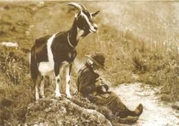 Il Etait Une Fois L Auvergne Et Les Cevennes Chevre Gardand Sa Chevriere 1930 REPRODUCTION  8(scan Recto-verso) MA225 - Sonstige Gemeinden