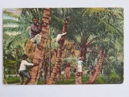 C.P.A. : U S A , HAWAII : Cocoanut Group, HAWAIAN Islands - Etats-Unis