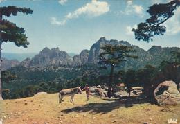 Corse Du Sud,col De Bavella,et Foret,au Coeur De Alta Rocca,ENFANT PAYSAN - Non Classés