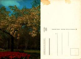 Arbre En Fleur Et Tulipe - Arbres