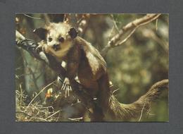 ANIMALS - ANIMAUX - MADAGASCAR - AMBOAALA AIAY - FAUNE LÉMURIEN AYE AYE - PHOTO HOA-QUI - Autres