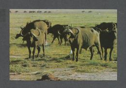 ANIMALS - ANIMAUX - TROUPEAU DE BUFFALOS - BUFFEL - BUFFLE - Autres