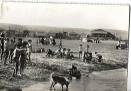 11 GRUISSAN LA PLAGE LES CHALETS 1958 CPSM Format Cpm 2 SCANS - Autres Communes
