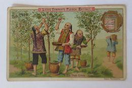 Liebig, Serie 198, Der Tee, Nr.1 Die Tee Ernte  ♥   - Liebig