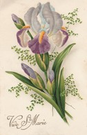Prénoms : MARIE : Vive Sainte-marie : Fleurs - Iris - Vornamen