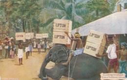 R020580 Loading Elephant. Eadella Tea Estate. Ceylon. Faulkner - Cartes Postales