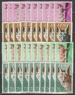 10x Ifni 1957, Jackals (MNH, **) - Stamps