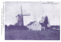 Buggenhout: Weiveldmolen ( 2 Scans) - Buggenhout