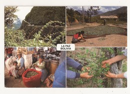 BOLIVIE LA PAZ La Coca Planta Médicinal - Bolivia