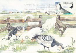 D37018 CARTE MAXIMUM CARD FD 1994 NETHERLANDS - CANADIAN GEESE GOOSE CP ORIGINAL - Oies