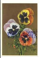 Bouquet De Pensées. Coloprint Select 9073 - Non Classés