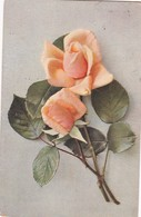 ROSAS ROSES FLOWERS FLEURES. TSN. CIRCULEE 1913 PARIS A BERLIN - BLEUP - Fleurs