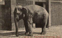 PARC ZOOLOGIC DE BARCELONA. - ELEFANTE // ELEPHANT - Elefantes