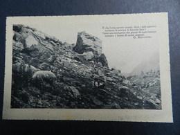 19930) LOCALITA' ALPINA DA IDENTIFICARE E FRASE DI BERTACCHI NON VIAGGIATA 1925 CIRCA - Cartoline