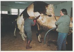 MUTH -1990 - COLLECTION 91/58 - 300 EX - Frankreich