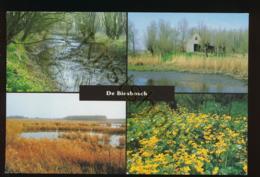 De Biesbosch [AA42-5.438 - Niederlande