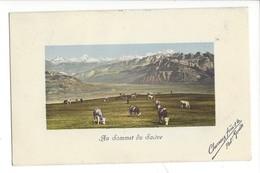 21875 - Au Sommet Du Salève Vaches 1913 - Autres Communes