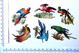6 CHROMOS DECOUPIS  DORES.   H : +- 5 Cm......OISEAUX DE PARADIS ET PERROQUETS - Animals