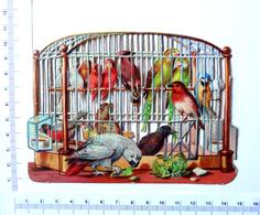 CHROMO DECOUPI .....LARGEUR  :13 Cm......CAGE D'OISEAUX...PERROQUETS Etc..... - Animals
