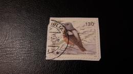 2008 Uccelli Manticola Saxatilis - Svizzera