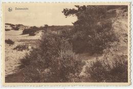 Heide - Kalmthout - Duinenzicht - Kalmthout
