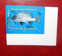 MAROC MOROCCO MARRUECOS FAUNE MARINE POISSON TIMBRE NON DENTELÉ IMPER - Marruecos (1956-...)
