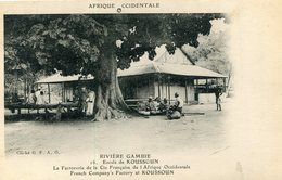 GAMBIE(KOUSSOUN) ARBRE(FACTORERIE) - Gambie
