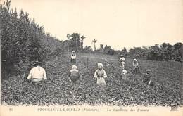 29-PLOUGASTEL-DAOULAS- LA CUEILLE DES FRAISES - Plougastel-Daoulas