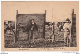 GU 16 -  L' AUVERGNE  -  SUR LA MONTAGNE - MONTAGE DU PARC - PAYSANS , TROUPEAU DE VACHES  - 2 SCANS - Auvergne