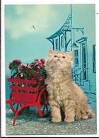 Gatti - Non Viaggiata - Gatti