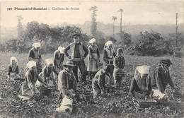 29-PLOUGASTEL-DOUALAS - CUEILLETTE DES FRAISES - Plougastel-Daoulas
