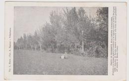 CUSTOZA  (VR)  Cascina Cavalchina Dove Venne Ferito Nel 1866 Amedeo Di Savoia - F.p. - Anni '1905-'1908 - Verona