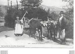 Attelage Auvergnat - Auvergne Types D'Auvergne