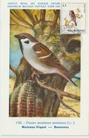 Saint Marin Carte Maximum 1972 Oiseaux Moineau 810 - Lettres & Documents