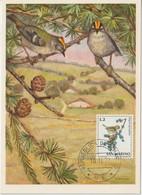 Saint Marin Carte Maximum 1972 Oiseaux Roitelet 811 - Lettres & Documents