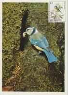 Saint Marin Carte Maximum 1972 Oiseaux Mésange 812 - Lettres & Documents