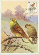 Saint Marin Carte Maximum 1972 Oiseaux Ortolan 813 - Lettres & Documents