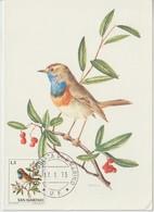 Saint Marin Carte Maximum 1972 Oiseaux Gorge-bleue 814 - Lettres & Documents