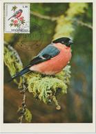 Saint Marin Carte Maximum 1972 Oiseaux Bouvreuil 815 - Lettres & Documents
