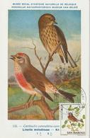 Saint Marin Carte Maximum 1972 Oiseaux Linotte 816 - Lettres & Documents