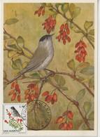 Saint Marin Carte Maximum 1972 Oiseaux Fauvette 818 - Lettres & Documents