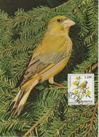 Saint Marin Carte Maximum 1972 Oiseaux Verdier 819 - Lettres & Documents
