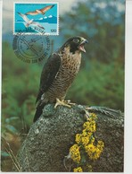 Saint Marin Carte Maximum 1978 Oiseaux Faucon 962 - Lettres & Documents
