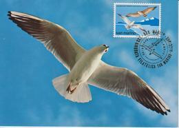 Saint Marin Carte Maximum 1978 Oiseaux Mouette 963 - Lettres & Documents