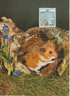 Saint Marin Carte Maximum 1991 Animaux Hamster 1274 - Lettres & Documents