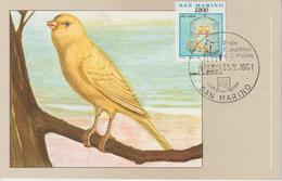 Saint Marin Carte Maximum 1991 Oiseaux Canaris 1277 - Lettres & Documents