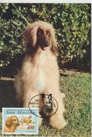 Saint Marin Carte Maximum 1991 Animaux Chien 1352 - San Marino