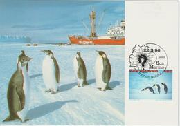 Saint Marin Carte Maximum 1996 Manchots 1441 - Lettres & Documents